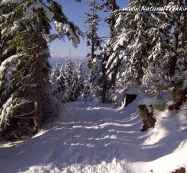 Snowshoeing - West Vancouver, BC